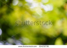 Bokeh background by through light form tree