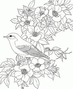 Coloring Pages For Adults Birdsand Flowers Free Coloring Pages