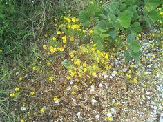 yellow wild rocks