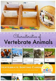 Classifying Vertebrate Animals from The Pinay Homeschooler