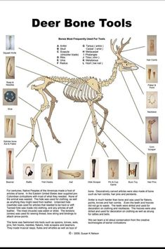 Many people want to use all they can from the animals they hunt. This is an excellent graphic that shows what survival tools you can create from a deer skeleton! Survival Life Hacks, Survival Tools, Wilderness Survival, Camping Survival, Outdoor Survival, Survival Prepping, Survival Quotes, Antler Crafts, Bone Crafts