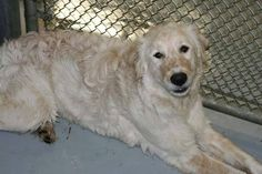 Foster home finds painful 'secret' hidden beneath recently rescued dog's fur