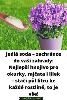 Herbs, Flowers, Plants, Inspiration, Buxus, Chemistry, Lawn And Garden, Biblical Inspiration, Herb