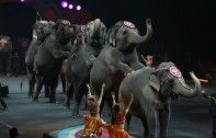 A Look At Where Ringling Bros. Are Sending Its Retired Elephants | Ecorazzi