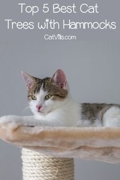 Looking for the best cat trees with hammocks? We've got you covered! Check out 5 fantastic & versatile options we love!