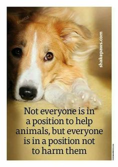 Be a human & HELP. DON'T ever be Inhumane & harm