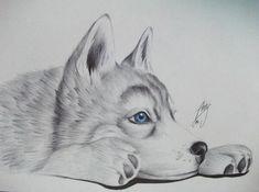 Resultado de imagen de dibujos a lapiz husky está increíble el dibujo