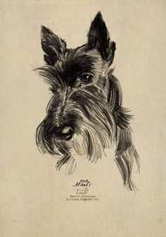 scottish terrier drawing images - Google Search
