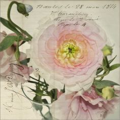 Postcard from Nantes, 1814.   Almost 200 years later, this peony seems to breathe freshness of a flower just picked moments ago