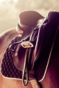 I love the attention to detail and quality found in the equestrian world.