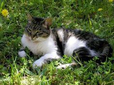 DIY pet safe weed killers