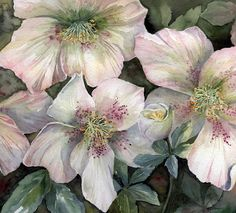 Watercolour Florals - Hellebores - Yvonne Harry