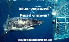 #Sharkweek is here!! Shark diving ! What a great experience! Love the ocean, sea and beaches! Water Bearer Foundation raises money for marine biology scholarships. Ocean awareness and preservation www.WaterBearerFoundation.com