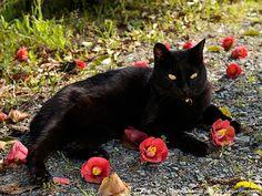 日本-2 | ネコギャラリー | デジタル岩合 動物写真家・岩合光昭氏 公認サイト