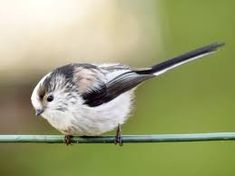 Terrific Image Result For British Garden Birds  Pastel Ideas  Pinterest  With Goodlooking Read Our Guide To Some Of The Most Common Garden Birds In The Uk And Use  Our Pictures To Help Identify Them With Divine Map Of Botanical Gardens Also Oak Garden Furniture Uk In Addition Kew Gardens Opening Times And Garden Of Eden Tattoo As Well As Rattan Garden Stool Additionally William Robinson Gardener From Pinterestcom With   Goodlooking Image Result For British Garden Birds  Pastel Ideas  Pinterest  With Divine Read Our Guide To Some Of The Most Common Garden Birds In The Uk And Use  Our Pictures To Help Identify Them And Terrific Map Of Botanical Gardens Also Oak Garden Furniture Uk In Addition Kew Gardens Opening Times From Pinterestcom