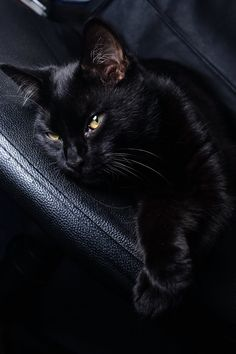 Click the Photo For More Black Cat Videos and Photos Pretty Cats, Beautiful Cats, Animals Beautiful, Cute Animals, Crazy Cat Lady, Crazy Cats, I Love Cats, Cool Cats, Kittens Cutest