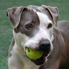 Zeus was adopted on 12/21/14!