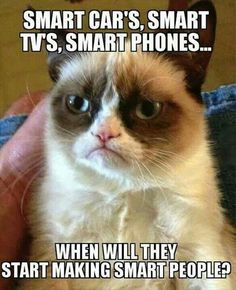 Word! Gumpy cat is smart