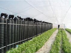An Innovative Way For Heating Greenhouses Using Solar Energy During The Winter For Summer Crop Production Greenhouse Cost, Underground Greenhouse, Concrete Walkway, Greenhouse Interiors, Rainwater Harvesting, Deciduous Trees, Water Conservation, Aquaponics, Winter Garden