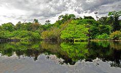 5 de setembro - Dia Mundial da Amazônia