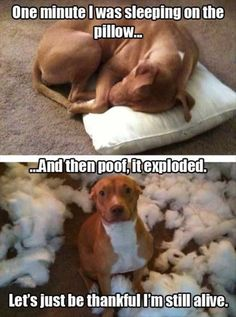 Funniest Pictures Of The Week - April 13, 2015