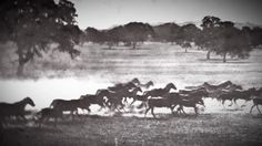 Muybridge's Zoopraxiscope: Setting Time In Motion