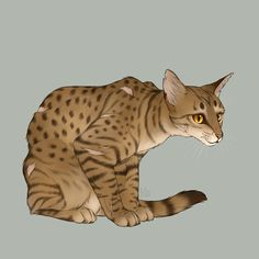 Cheetahstar leader of Stormclan. She has no mate. She has 2 sons and one daughter:Shadowstripe(son) Mudfoot(son) and Ashfire(daughter)She has 2 sisters:Frogfoot and Leopardtail. Mother:Redflower Father:Speedrunner. She's a loyal leader and is great to her clan. Has powers to change into anything. ~me~