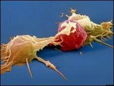 Células Natural killer atacando célula cancerígena