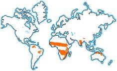 savanna_location_map.gif