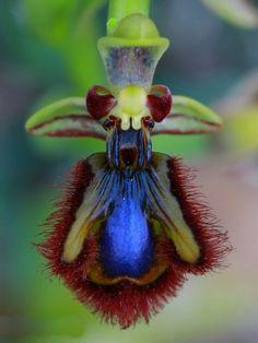 mimétisme de l'orchidée sauvage
