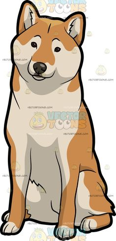 A Nice And Observant Shiba Inu Dog :  A dog with golden brown and cream colored coat fluffy tail erected ears sits on the floor while observing its surrounding  The post A Nice And Observant Shiba Inu Dog appeared first on VectorToons.com.   #clipart #vector #cartoon