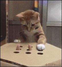 猫画像の画像29枚目!