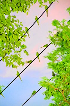 You Might Not Know It, But Parakeets Have Invaded The Skies Of Tokyo
