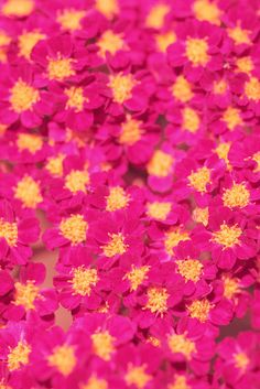 Bright Pink and Yellow Flowers by Pink Sherbet Photography, via Flickr
