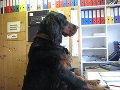 Das #Hotel #Gravas liegt auf einer Höhe von 1.250m über dem Meeresspiegel umgeben von Bergen am Rande von #Vella in Graubünden. Das tierfreundliche Schweizer Hotel ist perfekt für einen erholsamen Sommer- & Winterurlaub! Hunde urlauben gratis.   #hundimhotel #hund #dog #hotelhund #hotelgravas #gravas #graubünden #graubuenden #hundefreundlich #reisen #ferienmithund #hundeurlaub #tierischerurlaub #reisenmittieren #urlaubmithund #hundegratis #bürohund #petfriendly Bergen, Hotels, Freundlich, Dogs, Kanton, Animals, Camping, Winter Vacations, Swiss Guard