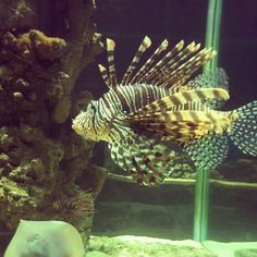 Another Beautiful Fish , I don't know it's name haha :D
