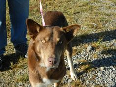Rival is an adoptable Husky searching for a forever family near Waverly, OH. Use Petfinder to find adoptable pets in your area.