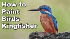 how to paint birds in acrylic kingfisher time lapse painting lesson - YouTube