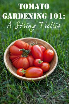Tomato Gardening 101: A String Trellis, plus tips on what to grow with the tomaotes. Via @Shaina Olmanson | Food for My Family