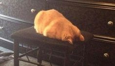 I see your Cinnabon cinnamon roll casserole and roasted chicken cat and I raise you roasted pig cat.
