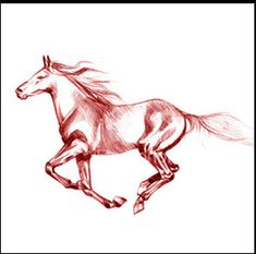 Horse Tattoo Photo: This Photo was uploaded by animallover_25. Find other Horse Tattoo pictures and photos or upload your own with Photobucket free imag...