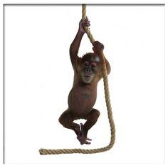 Muursticker oerangoetang orangutan