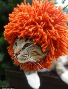 Hunting may prove difficult with such lurid orange headwear