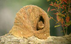 La naturaleza haciendo arquitectura: las construcciones del pájaro ...