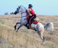The barb wire blog, endurance horses, stonewall saddles, endurance tack