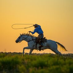 The roping horse.  Dang the world needs more good cowboys and good horses.