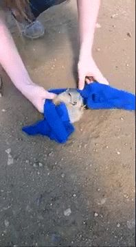 chubby guy stuck in the ground