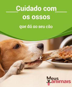 Cuidado com os ossos que dá ao seu cão   Ossos e #cães parecem parceiros inseparáveis no nosso inconsciente #coletivo. Os críticos dizem que os riscos superam os #benefícios. #Alimentação
