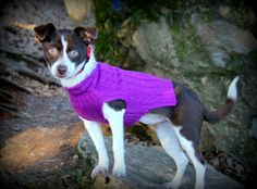 Today's Rat Terrier is definitely an intelligent, active small dog that's cherished each for pest handle and as a loved ones pet. Rat Terrier Puppies, Rat Terriers, Boston Terrier, Cute Baby Animals, Rats, Small Dogs, New Orleans, Cute Babies, First Love