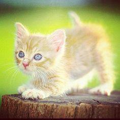 #Cats  #Cat  #Kittens  #Kitten  #Kitty  #Pets  #Pet  #Meow  #Moe  #CuteCats  #CuteCat #CuteKittens #CuteKitten #MeowMoe      awww.. ...   https://www.meowmoe.com/27022/